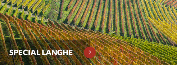 Wines from Langhe, Piedmont, Italy